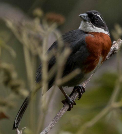Bird watching Peru Montanita